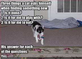 Three things a cat asks himself when finding something new: 1.  Is it mine? 2. Is it for me to play with? 3. Is it for me to eat?