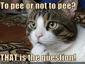 To pee or not to pee?  THAT is the question!
