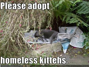 Please adopt  homeless kittehs.