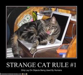 STRANGE CAT RULE #1