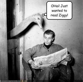 OHai! Just wanted to read Ziggy!