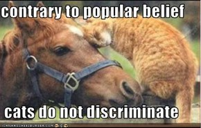 contrary to popular belief   cats do not discriminate