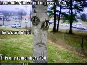 Remember those talking trees from the Wizard of Oz? This one remembers YOU.