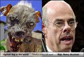 Ugliest dog in the world Totally Looks Like Rep. Henry Waxman