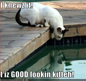 I knewz it!  I iz GOOD lookin kitteh!
