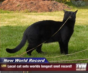 New World Record - Local cat sets worlds longest snot record!