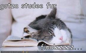 gotza studee fur  finalzzzzz...