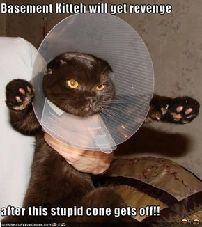 Basement Kitteh will get revenge  after this stupid cone gets off!!