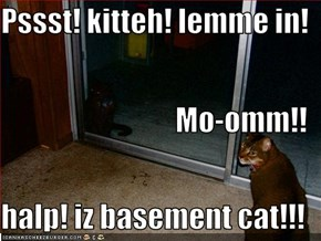 Pssst! kitteh! lemme in! Mo-omm!! halp! iz basement cat!!!