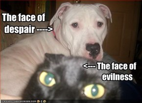 The face of        despair ---->