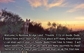 Welcome to Rainbow Bridge Land,  Trouble.  I Iz Ur Guide, Dude.   I beenz here since Sept '06.  Iz nice place wiff many Cheezfrends. U can eben watch ober Ur Daddy, Badd from time to timez.  I will splain ebberting to U an oh yes, dere are many squirrels