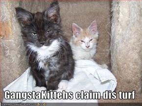 GangstaKittehs claim dis turf