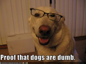 Proof that dogs are dumb.