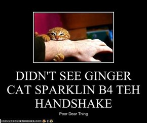 DIDN'T SEE GINGER CAT SPARKLIN B4 TEH HANDSHAKE