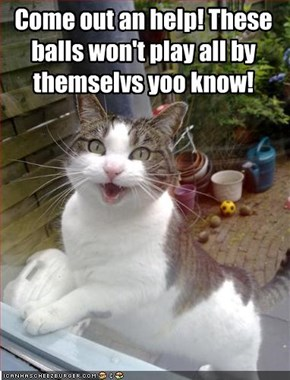Come out an help! These balls won't play all by themselvs yoo know!