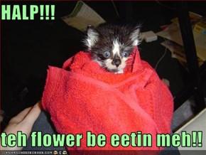 HALP!!!  teh flower be eetin meh!!
