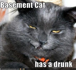 Basement Cat  has a drunk