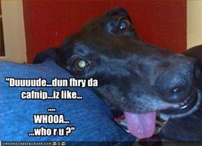 """""""Duuuude...dun fhry da cafnip...iz like... .... WHOOA... ...who r u ?"""""""