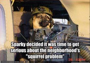 "Sparky decided it was time to get serious about the neighborhood's ""squirrel problem"""