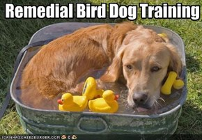 Remedial Bird Dog Training