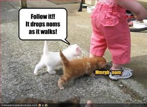 Follow it!!  It drops noms  as it walks!