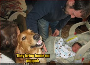 They bring home nu puppeh.
