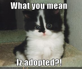 What you mean  Iz adopted?!