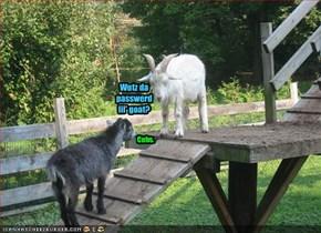 Wutz da passwerd lil' goat?