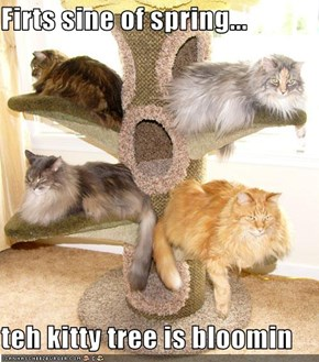 Firts sine of spring...  teh kitty tree is bloomin