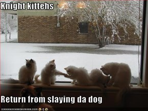 Knight kittehs  Return from slaying da dog