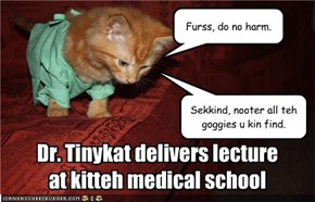 Dr. Tinykat delivers lecture at kitteh medical school
