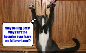 Why Ceiling Cat!? Why can't the hoomins ever leave me leftover tuna!?