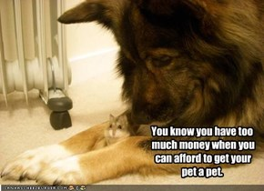 You know you have too  much money when you  can afford to get your  pet a pet.