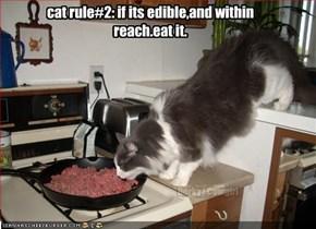 cat rule#2