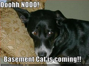 Ooohh NOOO!  Basement Cat is coming!!