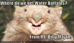 Where do we get Water Buffalos?  From ME, Billy Mayth!