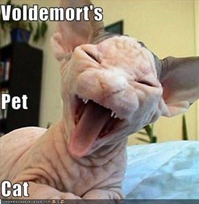 Voldemort's Pet Cat