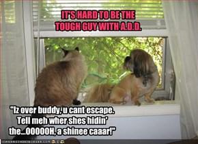 """Iz over buddy, u cant escape. Tell meh wher shes hidin' the...OOOOOH, a shinee caaar!"""