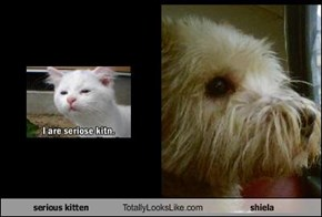 serious kitten  Totally Looks Like shiela