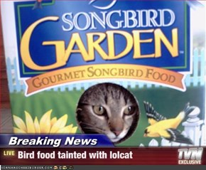 Breaking News - Bird food tainted with lolcat