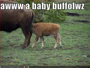 awww a baby buffolwz