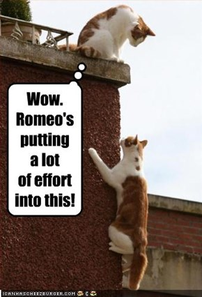 Wow. Romeo's putting a lot of effort into this!