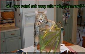 ok - hoo ruind teh soop wiht teh green stuf??