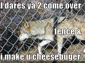 I dares ya 2 come over fence & i make u cheesebuger