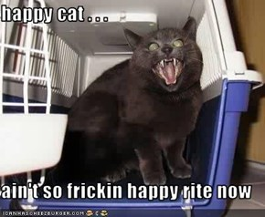 happy cat . . .  ain't so frickin happy rite now