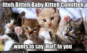 Itteh Bitteh Baby Kitteh Comitteh