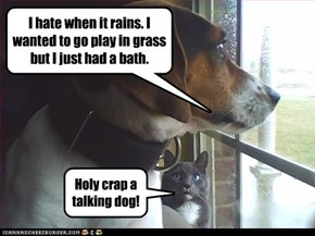 I hate when it rains. I wanted to go play in grass but I just had a bath.