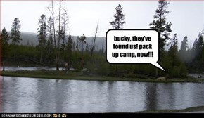 bucky, they've found us! pack up camp, now!!!