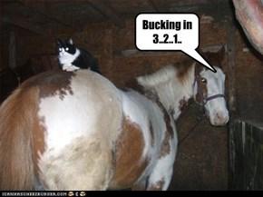 Bucking in 3..2..1..