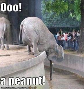 Ooo!  a peanut!